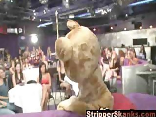 hawt sweethearts going wild with strippers